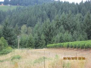 vineyard biod
