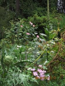 wcg garden