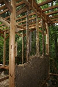 Cedar nest2 10.9.13