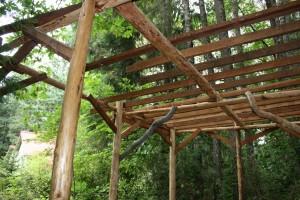 Cedar nest 10.9.13