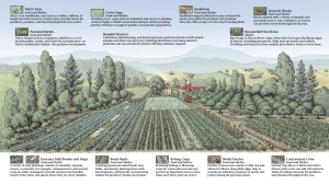 Graphic farmscaping osu Ipmnet